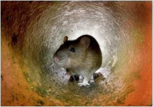 Chemical Exposure Influences Rat Behavior: Study