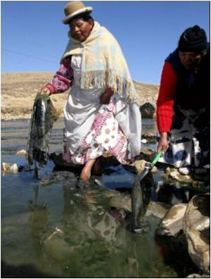 Bolivia's Lake Titicaca Strangled by Pollution