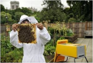 'Green Brain' Project to  Produce the First Accurate Computer Models of a Honey Bee Brain