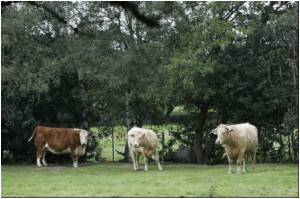 Humans Contract MRSA Found in Livestock Acquired Drug Resistance on the Farm