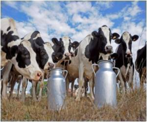 Greenhouse Emissions by Gassy Cows Reduced by Bizarre Feed Supplement