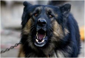Natural Resistance to Rabies Seen in Rare Group of People in Peru