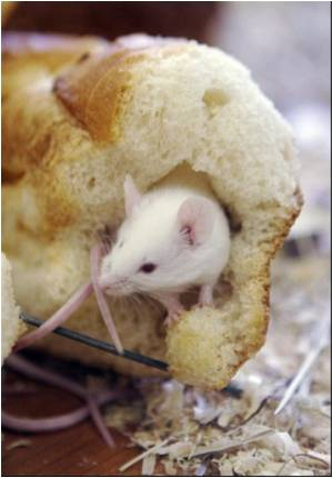 Incurable Cancer Tumor Development Blocked in a Mouse Model