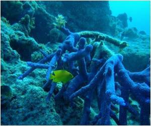 Scientists Explore Link Between Air Pollution and Coral Reef Growth