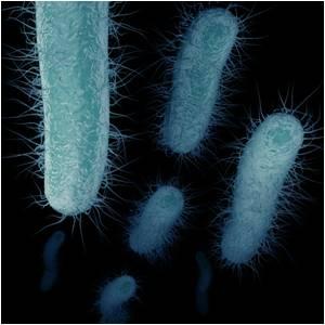 New Screening Method Identifies Drugs To Fight Deadly Antibiotic-Resistant Bacteria