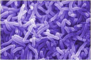 Cholera Mystery Solved