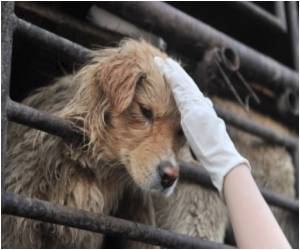 Animal Lovers Save Chinese Dogs from Dinner Table