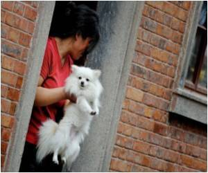 Homes With Dogs Have More Types of Bacteria: Study