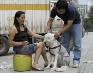 Animal Protection Law Reaches Draft Stage in China