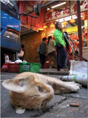 China Cat-lovers Save Felines from Dinner Tables