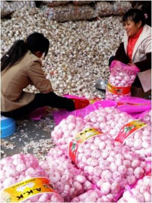 Prices of Garlic Hit the Roof in China