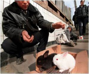 For Lunar New Year, China Goes Rabbit-Crazy