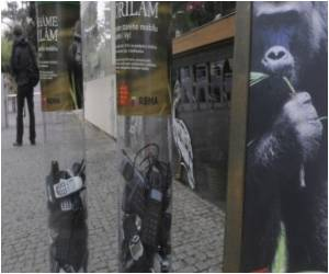 Animals in Cameroon Helped by Czech Gorilla-Mania Helps