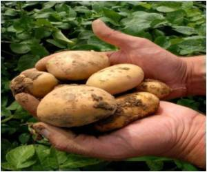 Children's Diet Consisting of White Potatoes is Packed With Nutrients