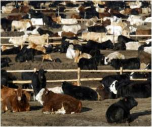 Mad Cow Disease Nearing Eradication: EU