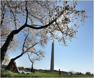 Proceeds Of the US Cherry Blossom Festival To Aid Japan After Its Triple Disaster