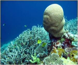 Coral Sperm Repository To Protect Great Barrier Reef