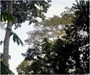 Experts Warn About 'Precarious' State of World's Primary Forests