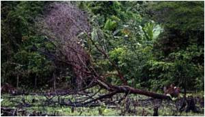 Mature Tropical Forests Recover Themselves