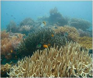 Climate Change can Damage Coral Reefs