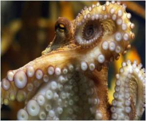 Octopus Able To Survive Extreme Temperatures Due To Blue Blood