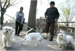 China's Homeless Pets are Innocent Victims of Economic Slump