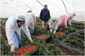 Spaniards Return to Farm Work as Unemployment Soars