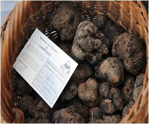 France's Precious Truffle Faces Threat from Global Warming