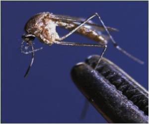 West Nile Virus Claims 3 Lives in Serbia