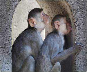 Training Monkeys to Recognize Themselves in Mirrors