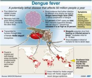 New Method can Detect Outbreak of Dengue Fever Weeks Before They Actually Occur