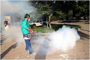 Deadly Dengue Threat Looms In Bolivia