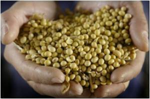 Soybean Instead of Fish?