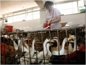 Contaminated Leukaemia Drugs Recalled in China