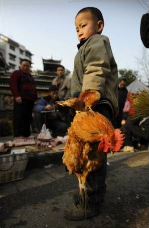 WHO Says No Evidence Of China Bird Flu Outbreak