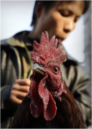 First Bird Flu Outbreak for 2009: Report from China