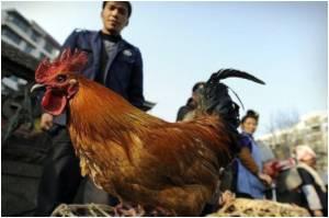 UN Says 'No Bird Flu Outbreak in China'