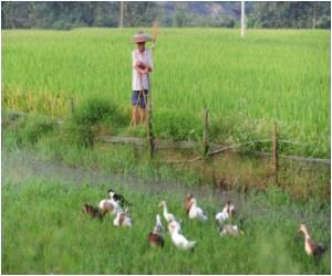 Research Details, How Rice can be Made to Adapt to Climate Change