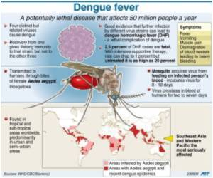 Scientists Identify Dose of Dengue Virus Needed for Transmission
