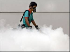 Singapore Dengue Cases Return to Epidemic Level