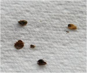 Effective Bed Bug Control Method Developed