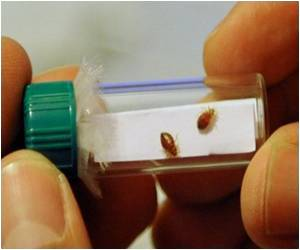 Study Says Canadian Bedbugs Carry Superbug Bacteria