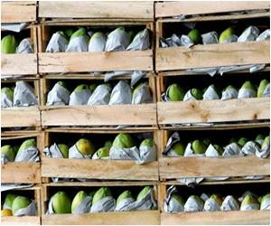99 In US Fall Ill Due to Salmonella-Infected Mexican Papayas
