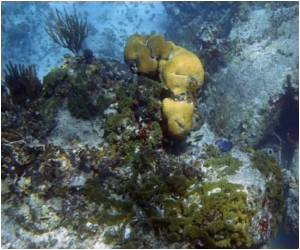 Sea Sponges Share a Genetic Connection With Humans