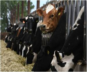 US Curbs Use of Certain Antibiotics in Livestock