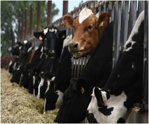 US Curbs Use of Certain Antibiotics in Livestock