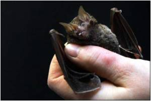 Scientists Seek Marburg Clues in Bats from Ugandan Mine