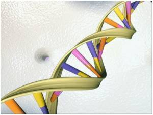 Body's 'back-up' Bypass Vessels Linked to Genes