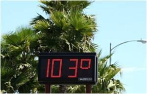 Study: Heatwave Decimates Marine Species Habitat