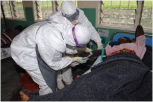 New Strain of Deadly Ebola Virus Discovered